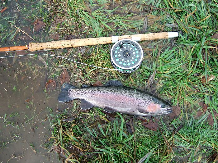 Fly Line For a Cane Salmon Rod